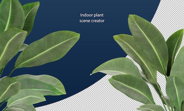 Strelitzia nicolai는 장면 장식을 위해 식물 잎을 남깁니다.