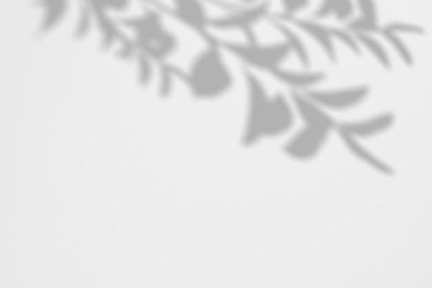 그림자 지점의 여름 배경 흰 벽에 나뭇잎