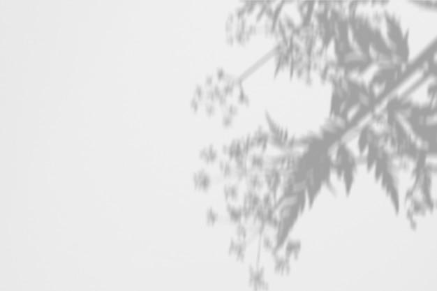 Лето из тени папоротника и цветов на белой стене
