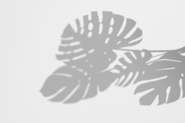 그림자의 여름 monstera 흰 벽에 나뭇잎