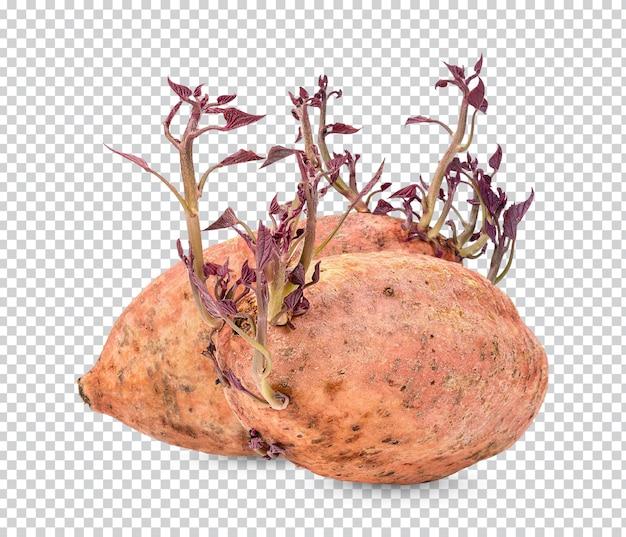 葉が分離されたサツマイモの芽プレミアムpsd