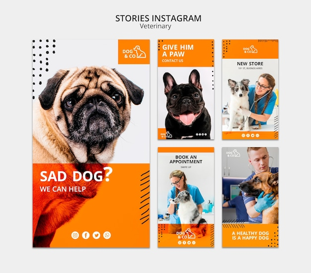 Template for instagram stories with veterinary concept