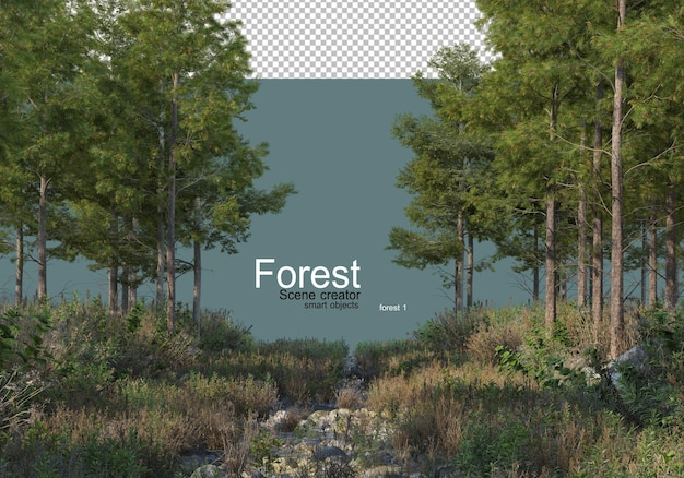 다양한 종류의 나무와 관목이 있는 숲의 자연
