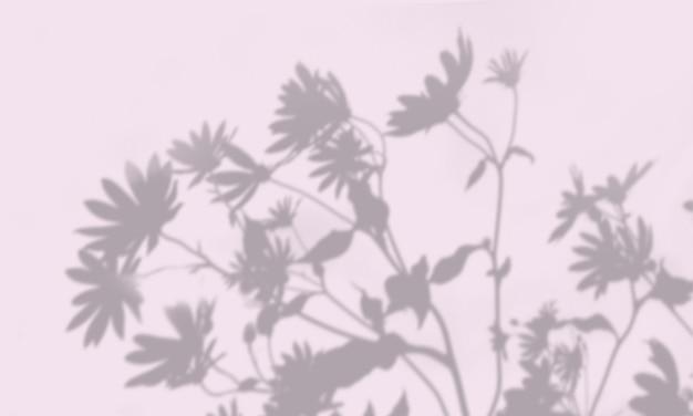 흰 벽에 이국적인 식물의 그림자.