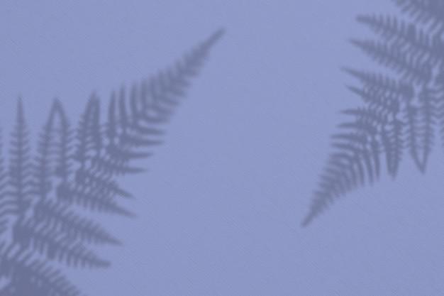 白い壁にエキゾチックな野生植物の影。