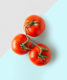 Вид сверху макет томата