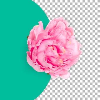 Вид сверху изолированный розовый цветок розы