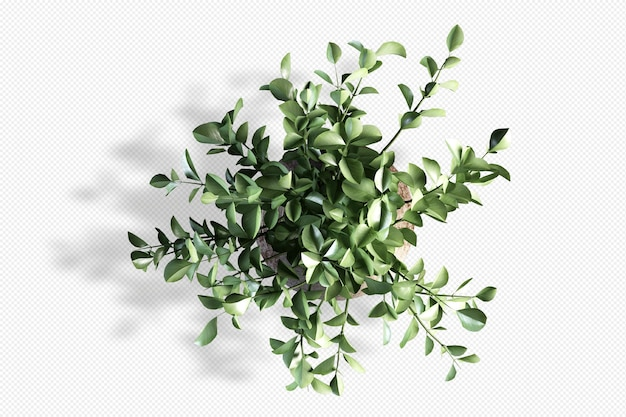 Top view branch leaf in  3d rendering isolated