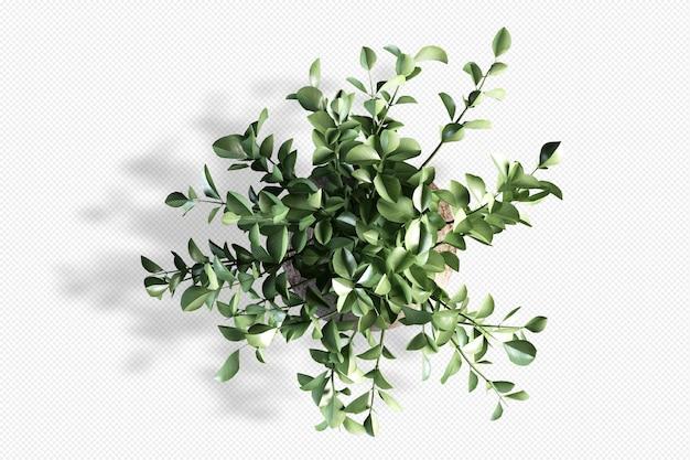 고립 된 3d 렌더링에서 상위 뷰 분기 잎