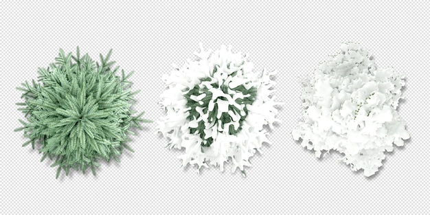 Top view conifer tree in 3d rendering isolated