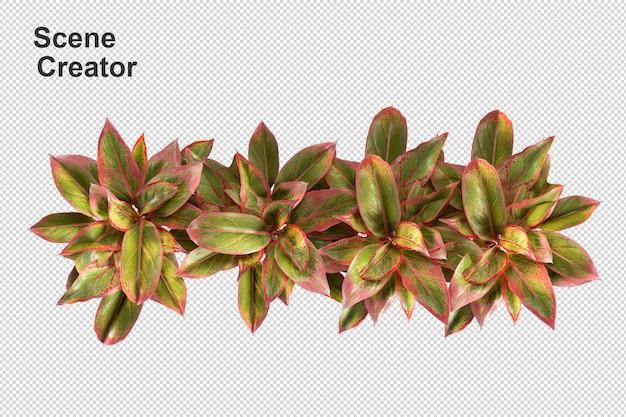 Цветочная корзина, вид сверху в 3d-рендеринге