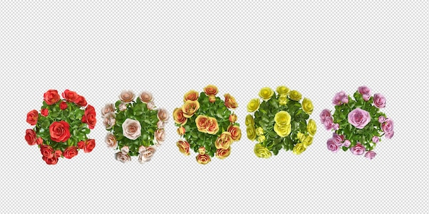 Top view flowers design in 3d rendering isolated