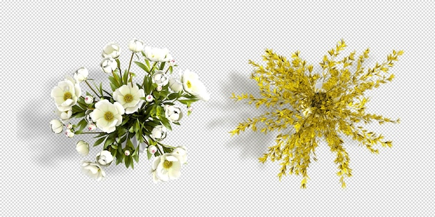 Top view flowers in pot 3d rendering isolated
