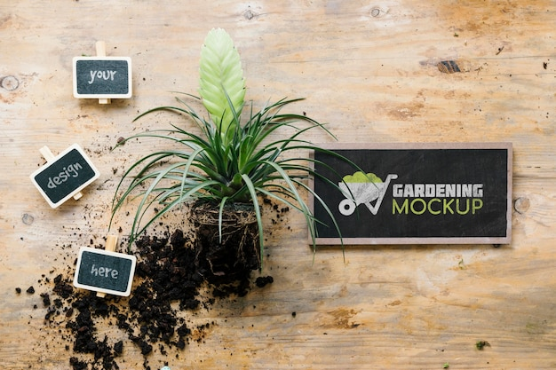 Top view of gardening concept mock-up