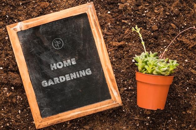 냄비에 식물을 가진 토양에 칠판의 상위 뷰
