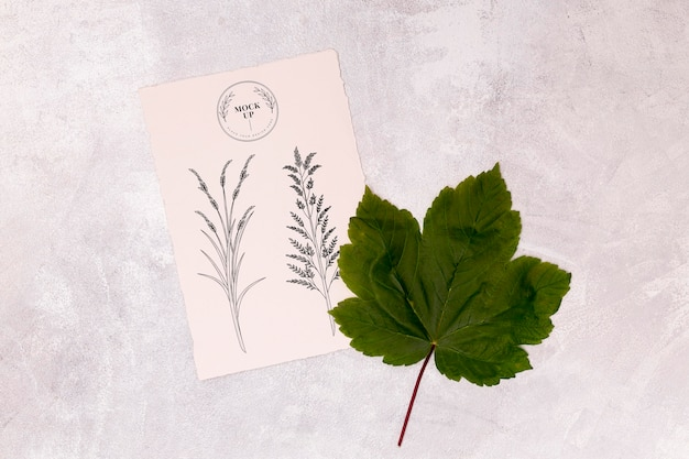 잎 개념 모형의 상위 뷰
