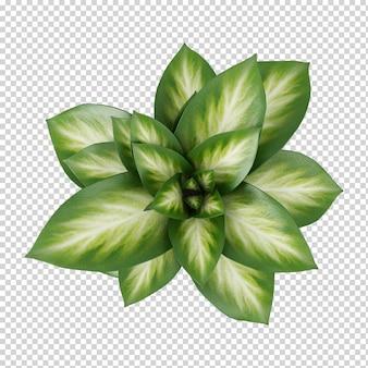 Вид сверху растение в горшке 3d-рендеринга