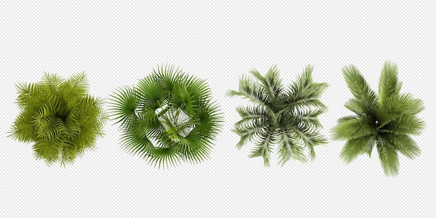 Top view plants in pot 3d rendering isolated