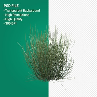 Tree 3d render isolated on transparent background