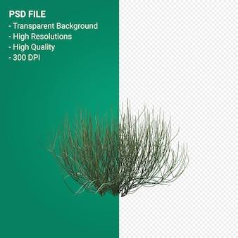 고립 된 나무 3d 렌더링