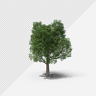 Tree isolated rendering with shadow first shape