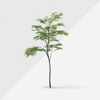 Tree isolated rendering with shadow second shape