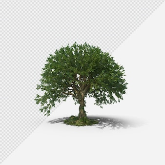 Tree isolated rendering with shadow third shape
