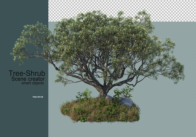 Trees and shrubs grass plants that are arranged in a variety of ways to form a small garden