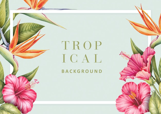 Tropical background with hibiscus and strelitzia