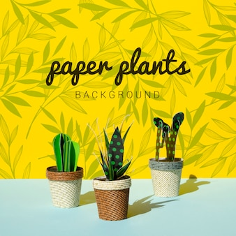 Tropical paper cacti plants with pots background