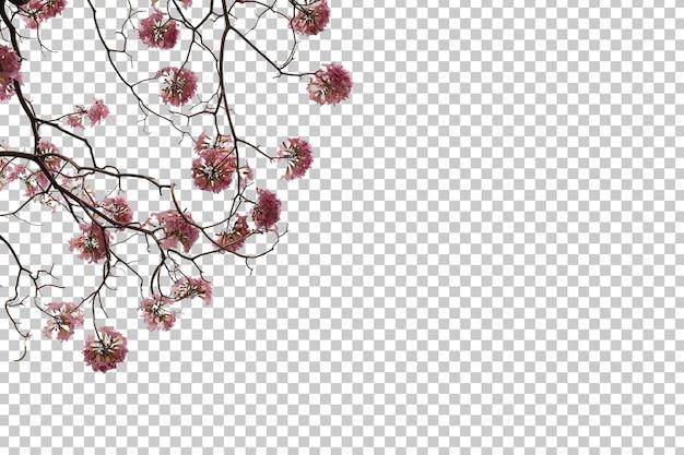 열 대 나무 꽃 잎과 분기 전경 절연