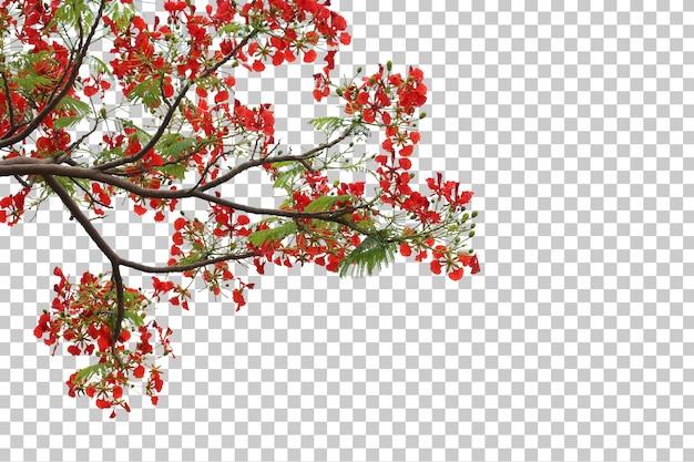 熱帯の木の花の葉と枝の前景が分離されました