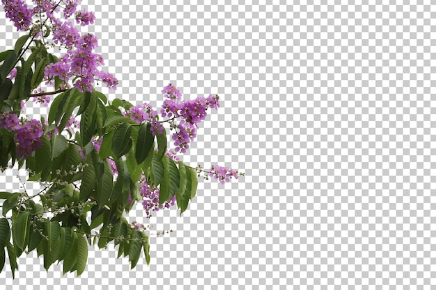 Tropical tree flowers leaves and branch foreground isolated