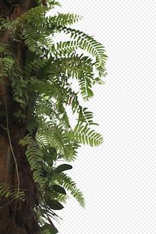 熱帯の木の葉と枝の前景が分離されました