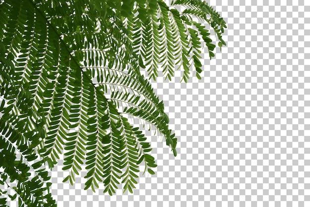 Листья тропических деревьев и передний план ветви изолированные