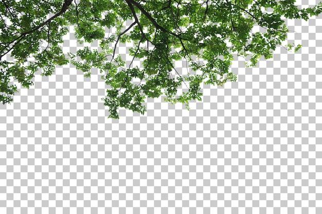 열 대 나무 잎과 지점 전경
