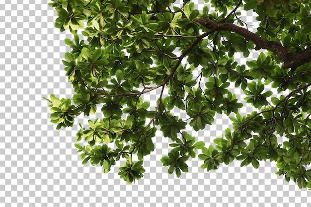 Тропические листья деревьев и ветви переднего плана