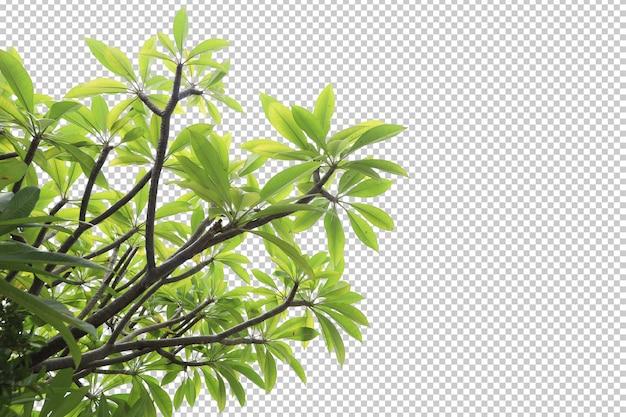 熱帯の木の葉と枝の前景