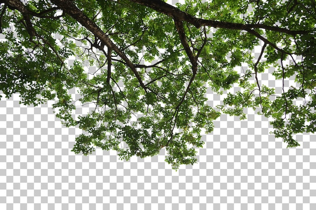 Tropical tree leaves and branch foreground