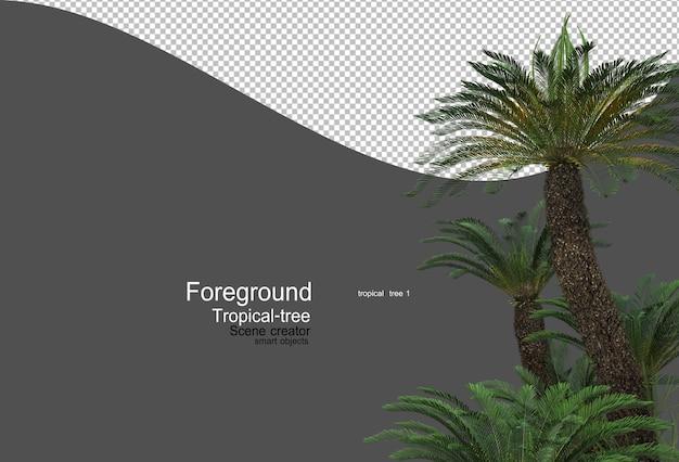 카메라 앞의 열대 나무