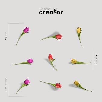 Vista dei fiori del tulipano del creatore di scena della molla