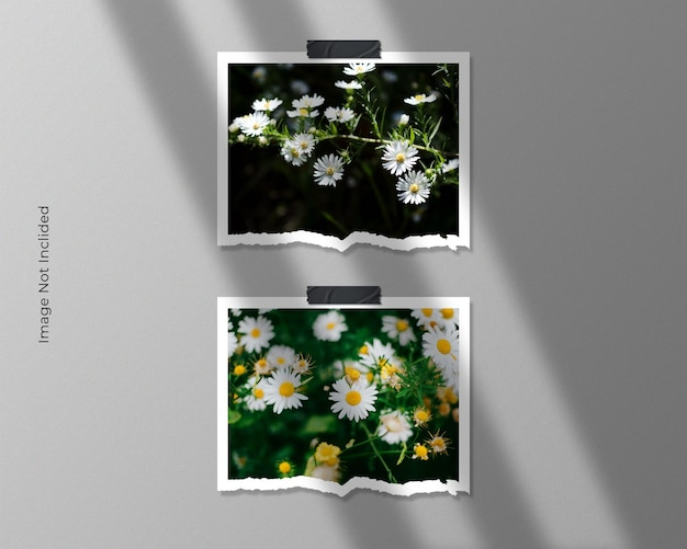 Twin square torn paper frame photo mockup design