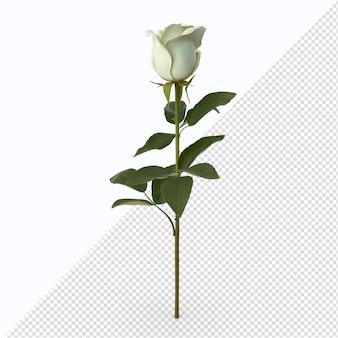발렌타인 화이트 로즈 절연