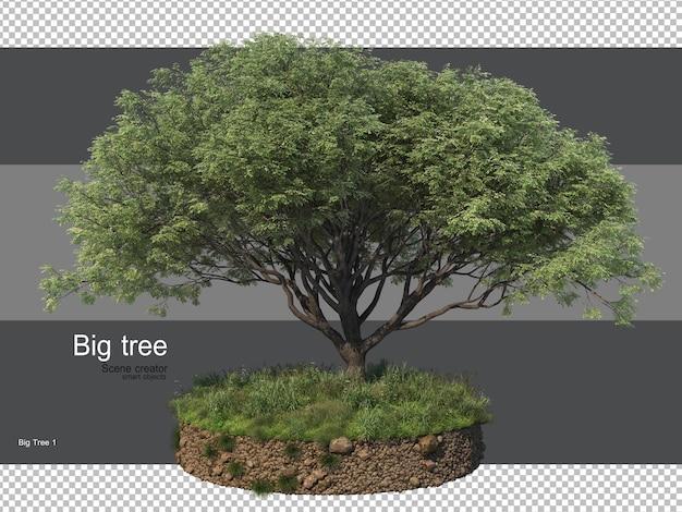 Разнообразие деревьев и травы