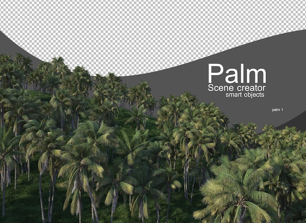 A variety of palm trees
