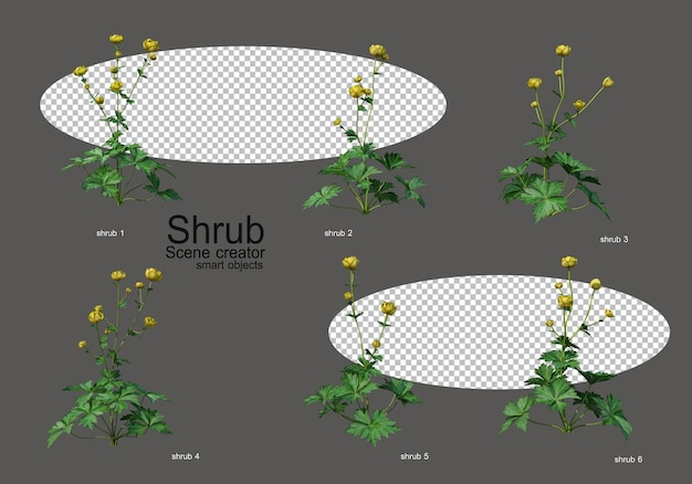 A variety of shrubs and flowers