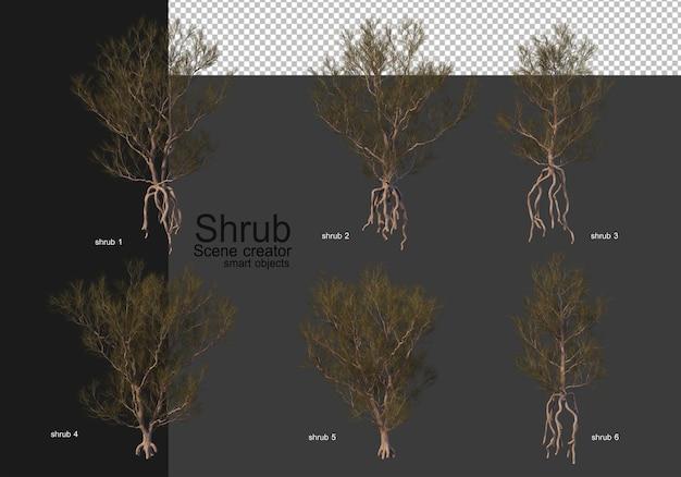 A variety of shrubs