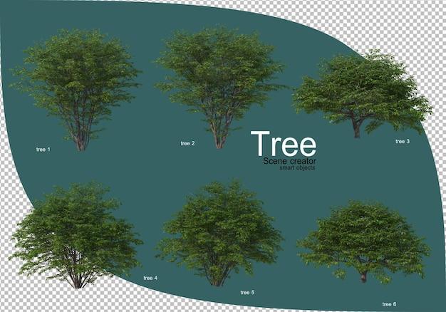 Variety of trees in 3d rendering