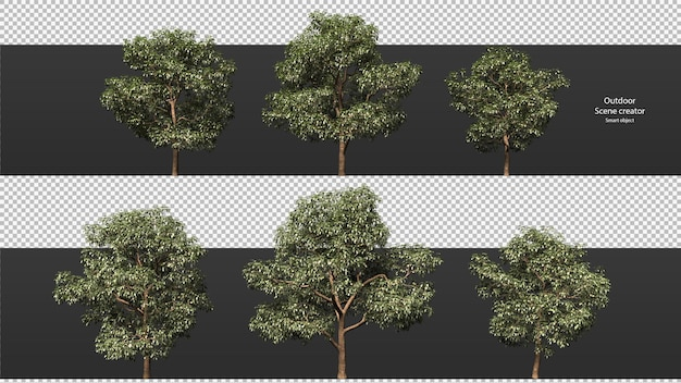 Variety trees clipping path trees isolated  3d tree rendering