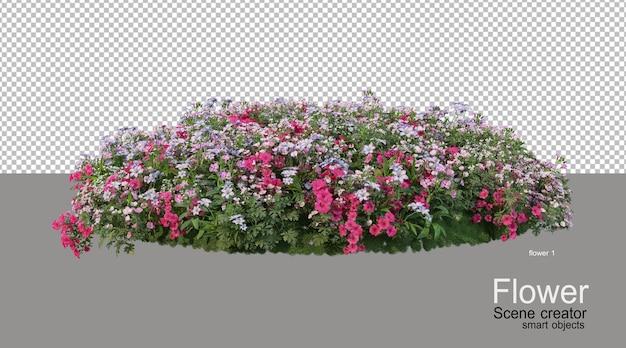 Различная окраска цветов